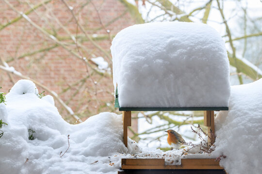 European robin  (Erithacus rubecula) with orange breast on a  wooden bird feeder in the garden after snowfall in winter