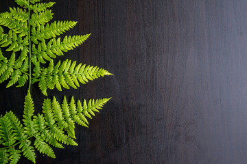 green fern leaves on grey background with copy space