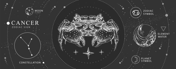 Fototapeta Modern magic witchcraft card with astrology Cancer zodiac sign. Realistic hand drawing crab illustration. Zodiac characteristic obraz