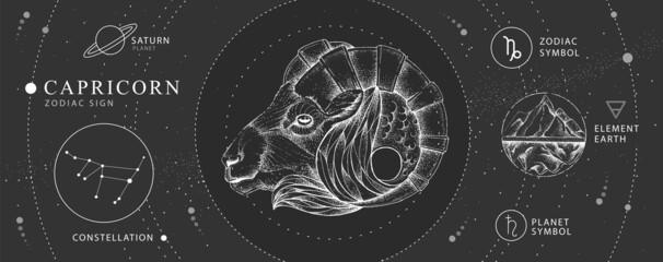 Fototapeta Modern magic witchcraft card with astrology Capricorn zodiac sign. Realistic hand drawing ram or mouflon head. Zodiac characteristic obraz