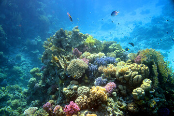 Obraz Underwater view of the coral reef. Life in the ocean. School of fish. Coral reef and tropical fish in the Red Sea, Egypt. world ocean wildlife landscape. - fototapety do salonu