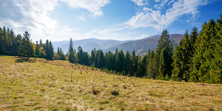 landscape with coniferous forest on the hill. beautiful nature scenery on a bright sunny morning. wonderful carpathian mountain landscape in autumn with clouds on the sky