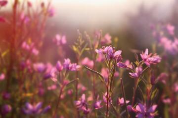 Obraz Letnia łąka - fototapety do salonu