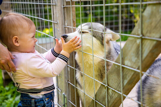 Cute Baby Looking At Dog In Cage