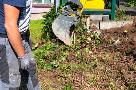 Digging out of trunk and roots with mini excavator. Tree stump removal