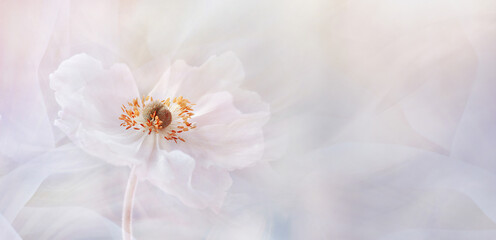Obraz Kwiat Panorama - fototapety do salonu