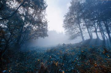 Obraz Jesienny mglisty krajobraz - fototapety do salonu