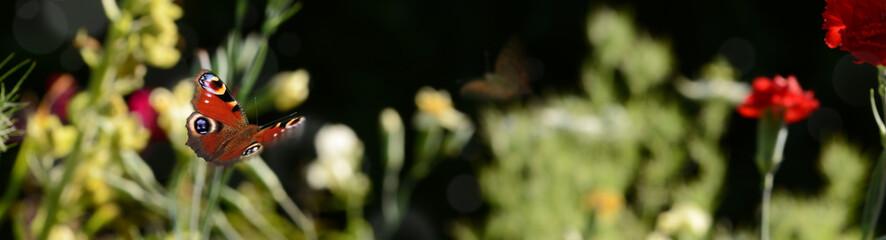 Obraz Schmetterling 807 - fototapety do salonu