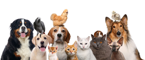 Animals in front of a white background