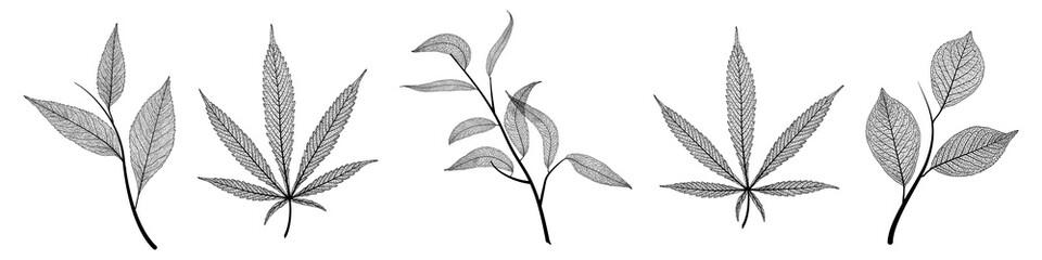 Set leaves veins of black on white. Vector illustration.