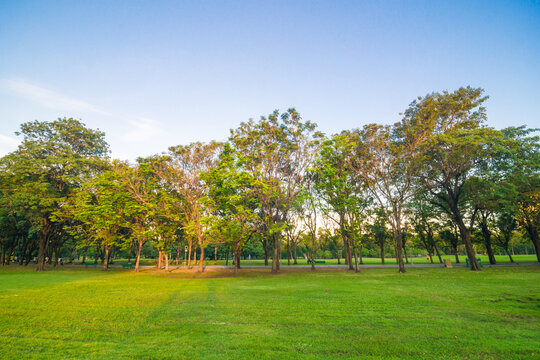 Green tree forest with green grass in public park sunset