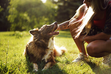 Fototapeta Young border collie dog on a leash in park obraz