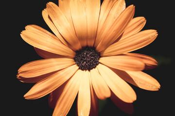 Obraz Kwiatostan.  - fototapety do salonu