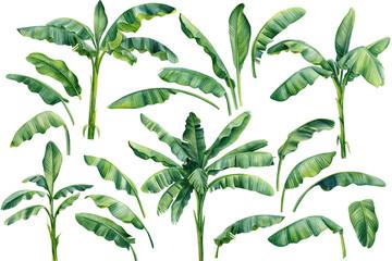 Fototapeta Set os banana palms and palm leaves on isolated white background, watercolor illustration. Jungle design elements obraz
