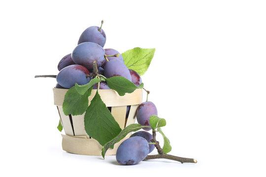 prune sur fond blanc, quetsche, prune bleu