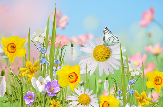 Beautiful wild flowers chamomile,  butterfly in morning haze in nature  Delightful airy artistic image.