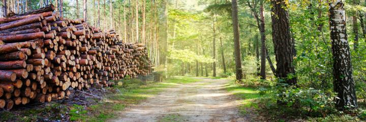 Natuurlijke houten dennen en sparren stammen gesneden en gestapeld in stapel, gekapt door houtkapindustrie. Stapel gekapte pijnbomen op bosachtergrond. Panoramische banner.