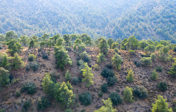 Mountain ridge covered with pine trees in Troodos mountains, Cyprus
