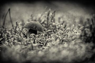 Widok z grzybem o brązowym kapeluszu.