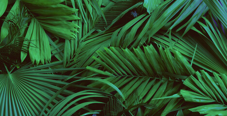 Palm green leaves or coconut in dark tones, background or green leafy tropical pine forest patterns for creative design elements. palm and coconut textures,