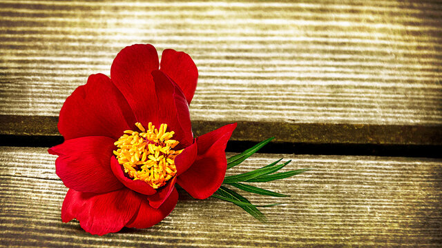 Flower on an old wooden retro table