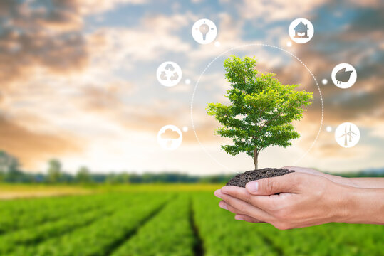 Hand holding big tree on soil over blurred organic rice field with campaign to save energy and use clean energy icon. It is a concept that shows energy saving to save the environment in the future.