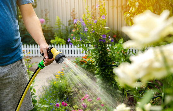 A gardener with a watering hose and a sprayer water the flowers in the garden on a summer sunny day. Sprinkler hose for irrigation plants. Gardening, growing and flower care concept. Selective focus