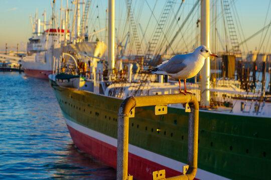 Möwe im Hamburger Hafen