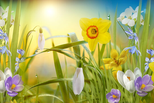 Beautiful wild spring flowers. Landscape wide format, copy space, cool blue tones.