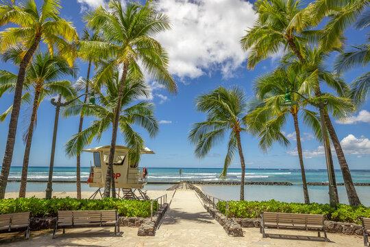 Waikiki beach palm trees in Hawaii