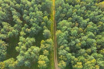 Gruntowa, leśna droga. Widok z drona.