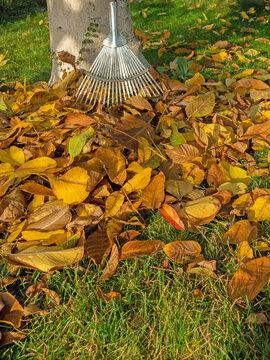 Buntes Herbstlaub mit Laubrechen