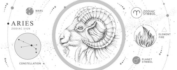 Fototapeta Modern magic witchcraft card with astrology Aries zodiac sign. Realistic hand drawing ram or mouflon head. Zodiac characteristic obraz