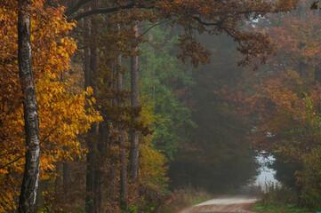 Obraz Las jesienią - fototapety do salonu