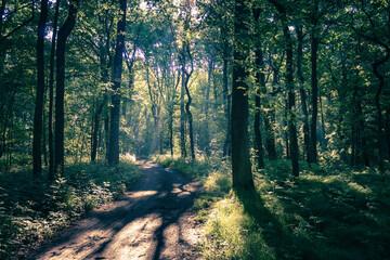 leśna ścieżka w słoneczny dzień