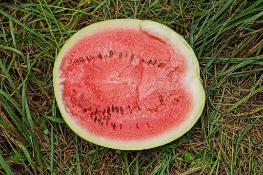 one large piece of red ripe watermelon lies in green grass in nature