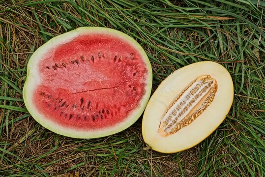 two pieces of fresh ripe fruits from red watermelon and yellow melon lie in green grass in nature
