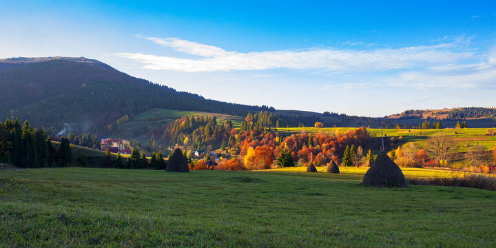 rural landscape in mountains. grassy meadows with high stacks on the rolling hills. trees in colorful foliage. sunny autumn afternoon with clouds on the sky