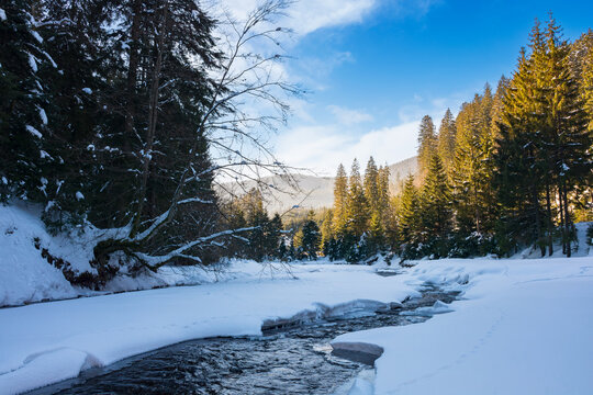 winter landscape with mountain river. coniferous forest on a snow covered shore. wonderful nature scenery in afternoon light