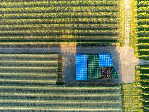 Große Obstplantage aus der Luft gesehen mit vielen Baumreihen und gestapelten Ernteboxen