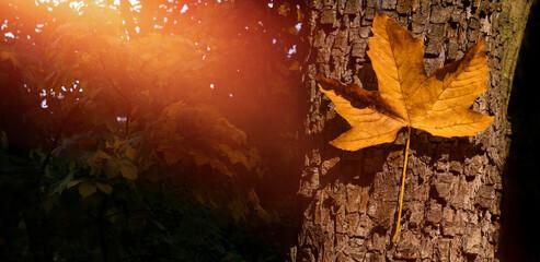 jesień, jesienny liść