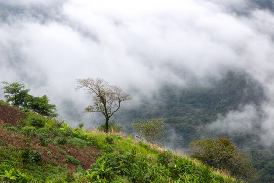 Mountain with moving mist for nature background at Phu Thap Buek, Phetchabun, Thailand