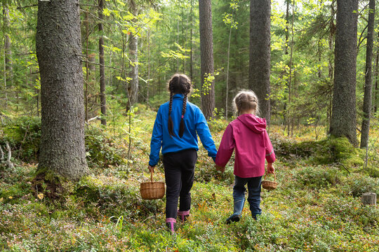 Two little girls carrying wicker baskets for gathering mushrooms and berries hiking in a forest in autumn season, back view
