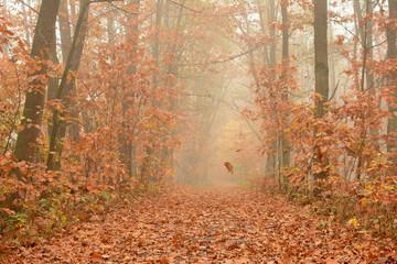 Fototapeta Jesienny las obraz