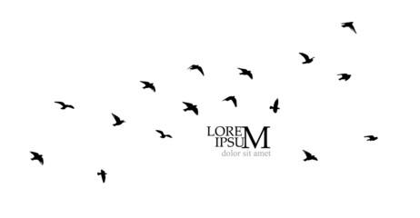Fototapeta A large flock of flying birds. Free birds. Vector illustration obraz