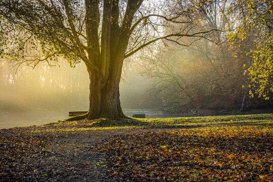 Novembermorgen im Revierpark Vonderort zwischen Bottrop und Oberhausen