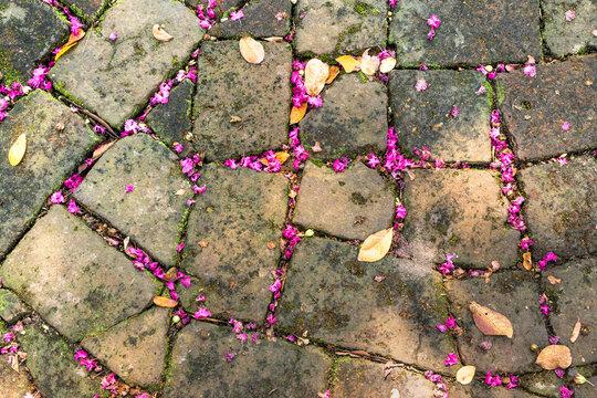 Old cobblestone bricks on ground with pink flower petals