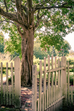 Outdoor garden scene with gate on white picket fence leading to tree and garden in summertime