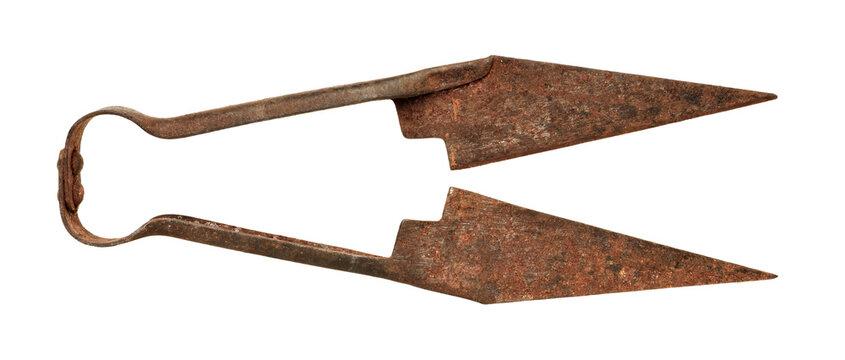 Pair of very old rusty sheep scissors