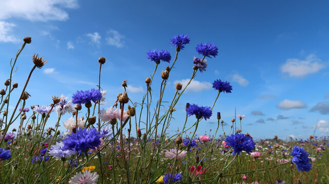 summer meadow with colorful flowers and a blue sky